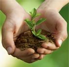 Développement durable Maroc Argan